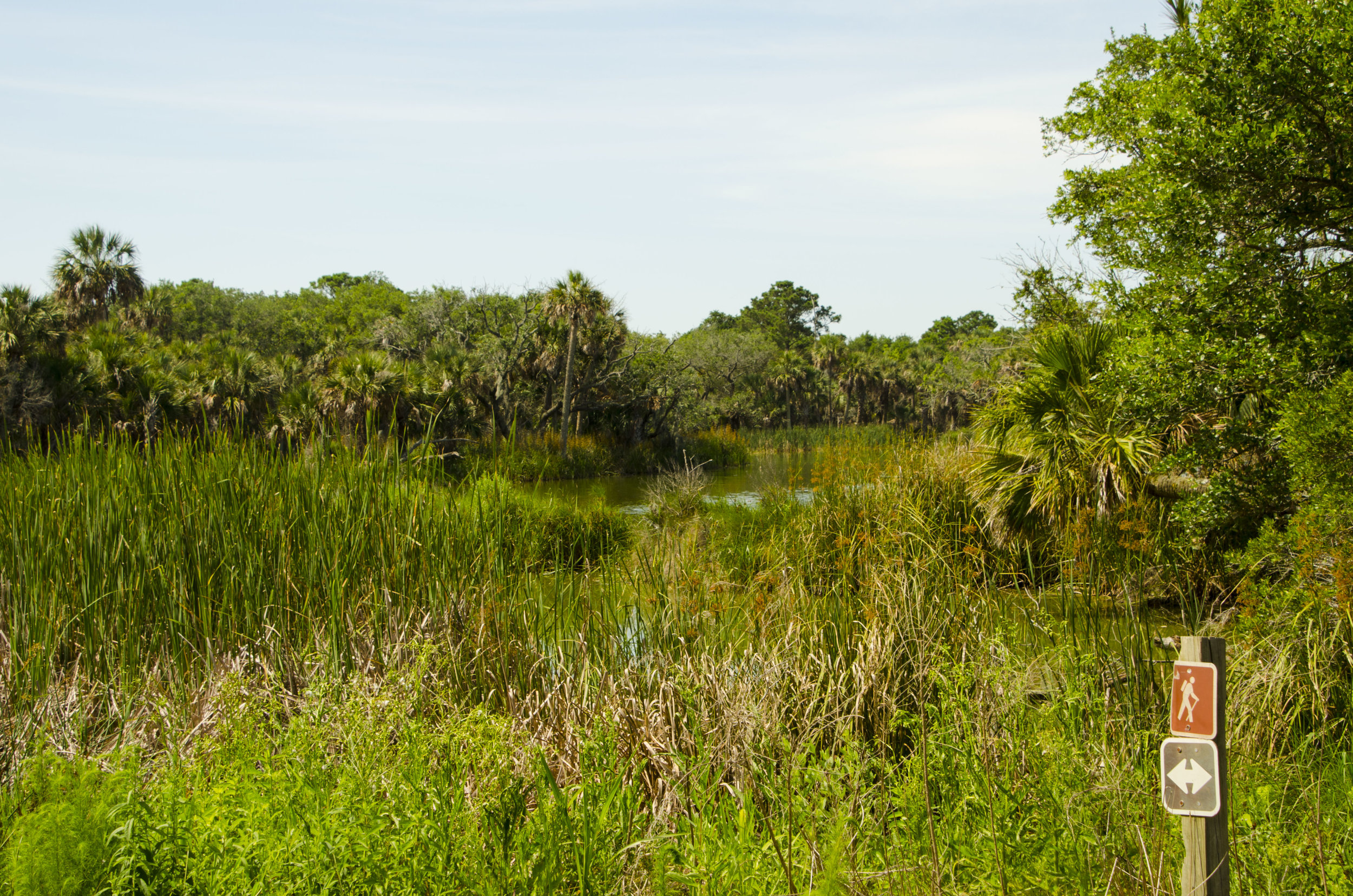 """Take a left here to see alligators along the """"Turkey Walk"""" trail."""