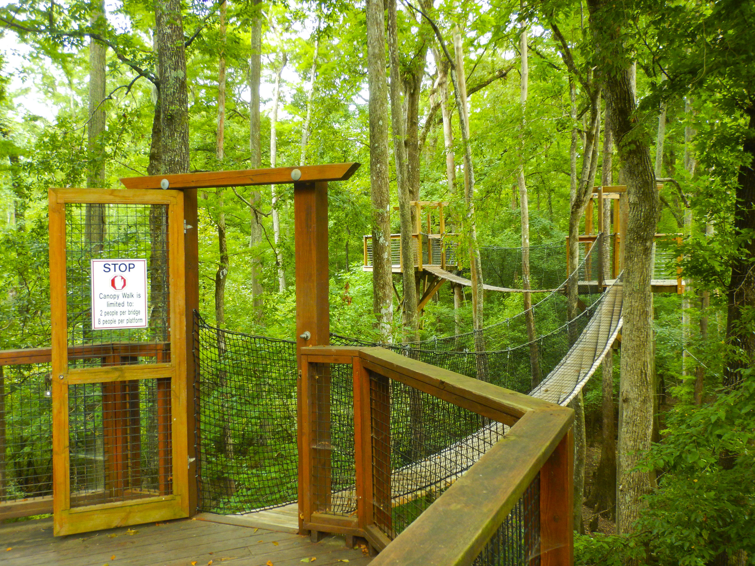 """This is awesome! The """"canopy walk"""" attached to the Environmental Discovery Center at Lynches River County Park will instantly make you feel like a kid again, while prividing some unique views of the river's floodplain from above."""