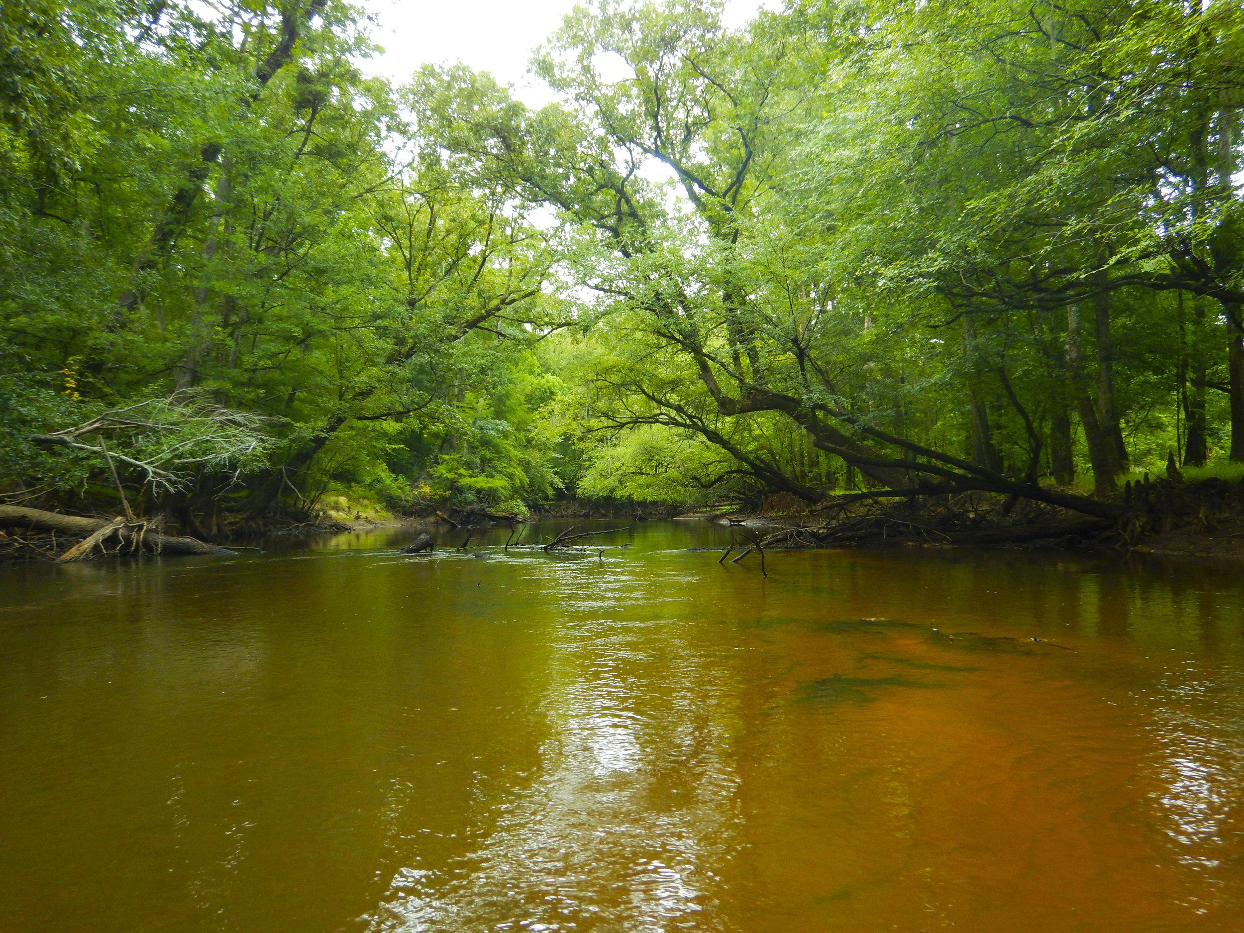 Lynches River Shots for Blog_23.JPG