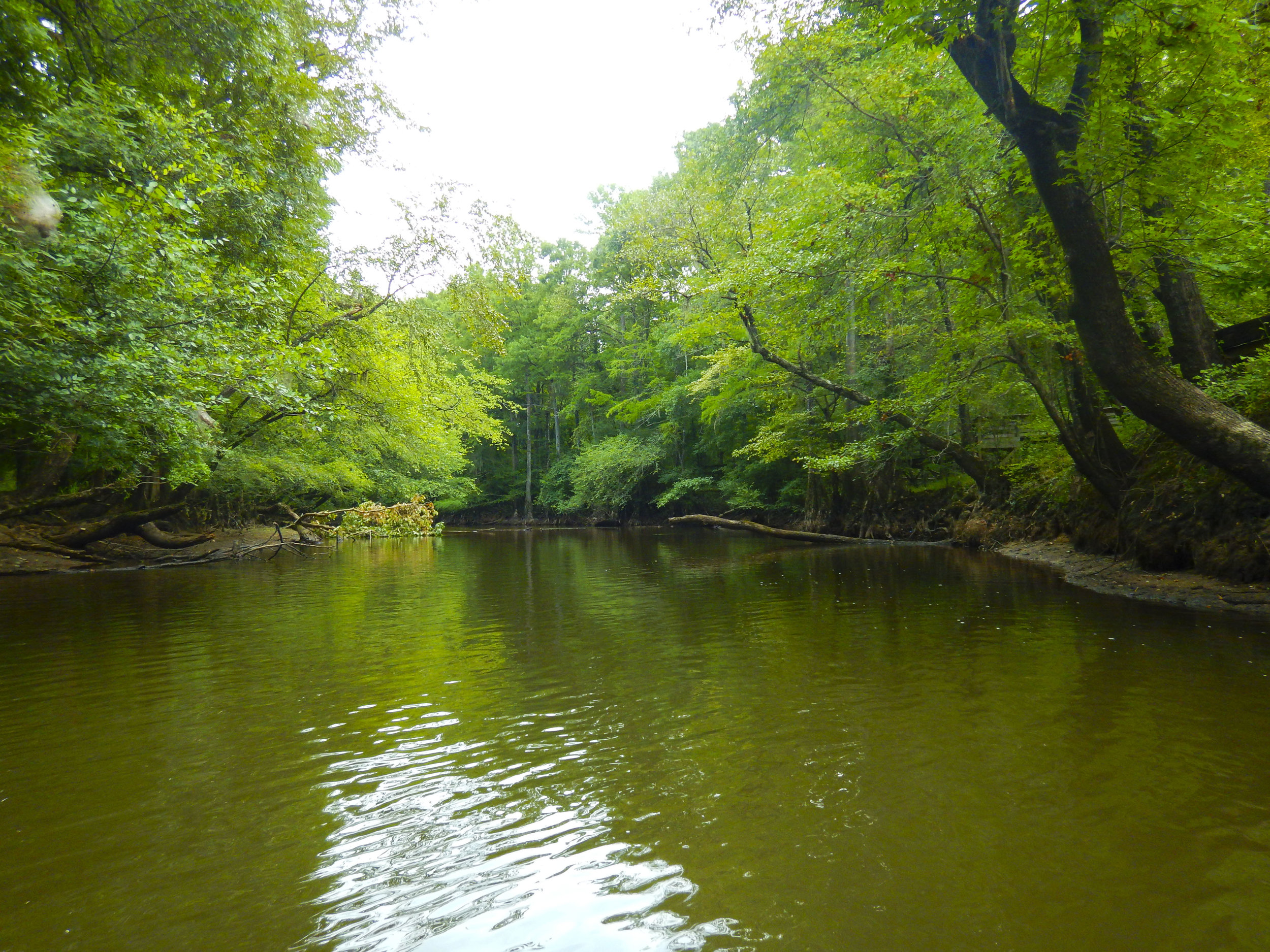 Lynches River Shots for Blog_20.JPG