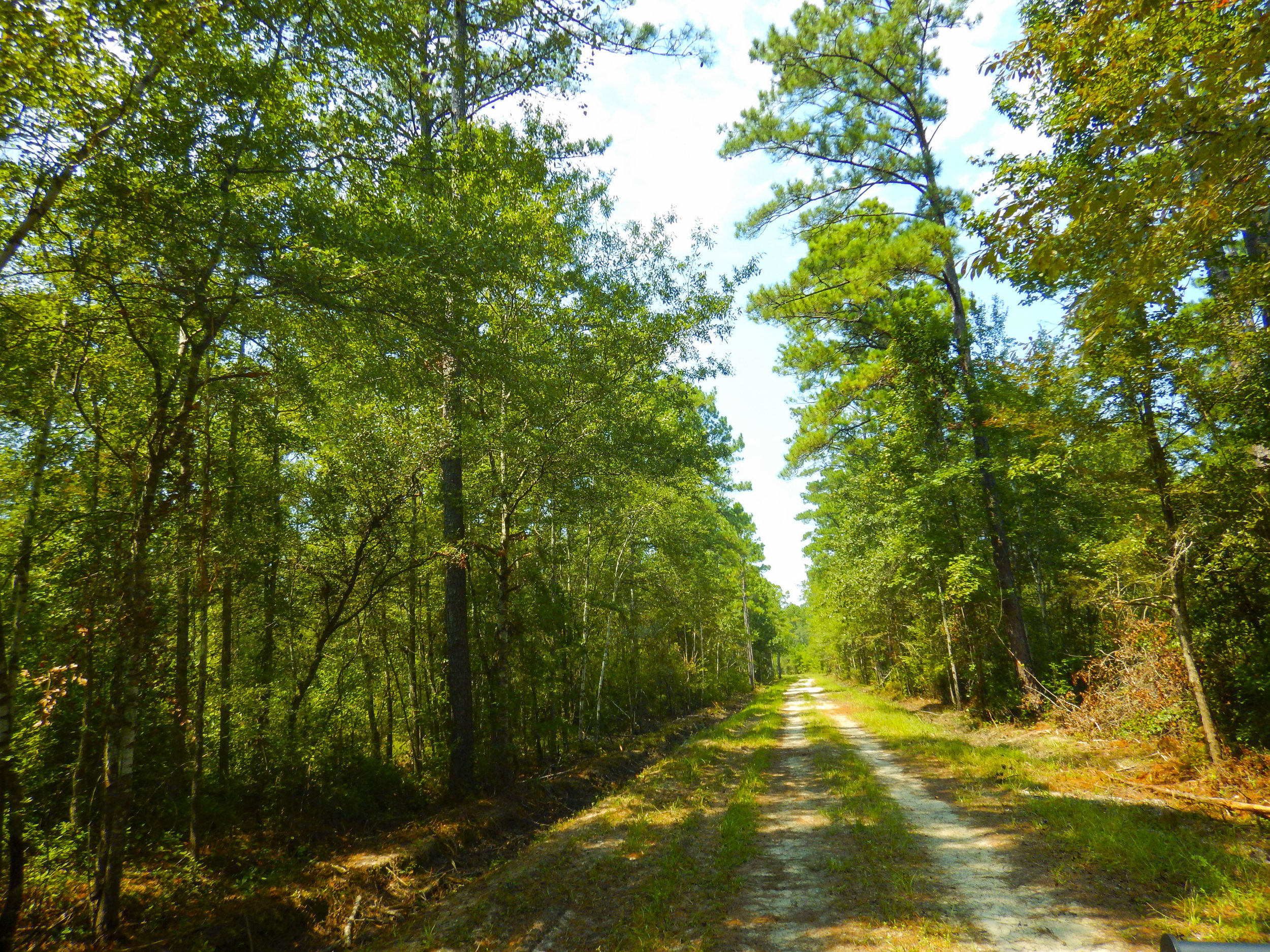 Logging road near the Highway 9 entrance to WRHP & WMA.