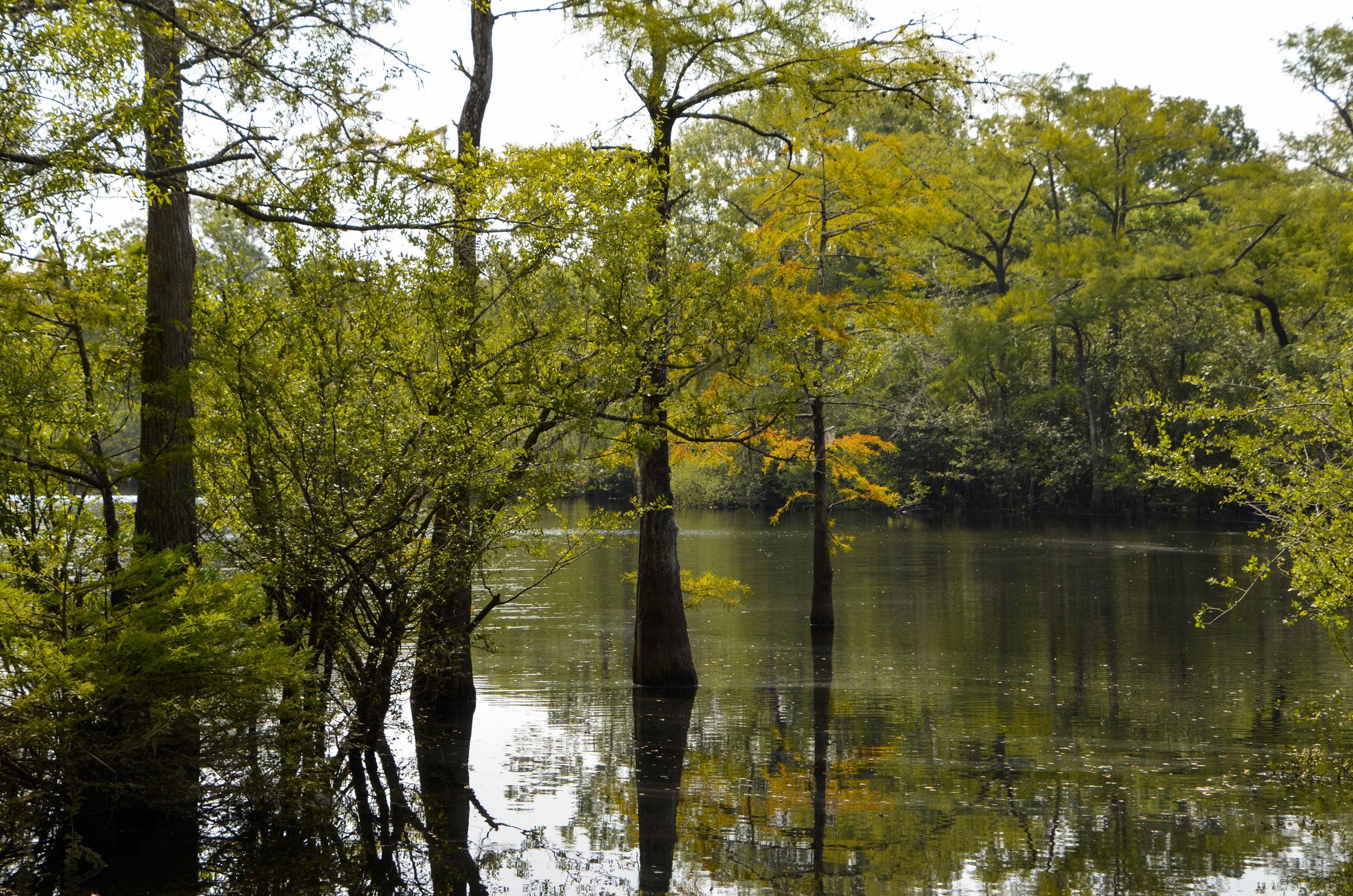 Ox bow lake at Big Savannah Bluff.