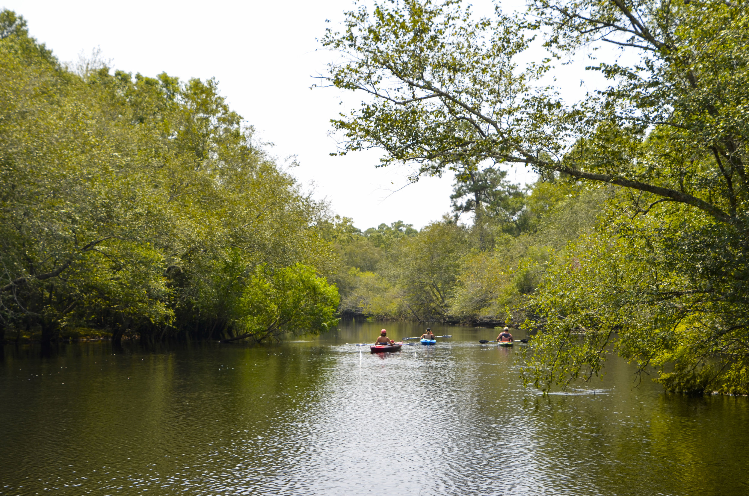 Headed towards the heart of the WRHP from Chris Anderson Landing. [Note: The SCDNR strongly urges all boaters to wear an approved PDF at all times while on the water.]