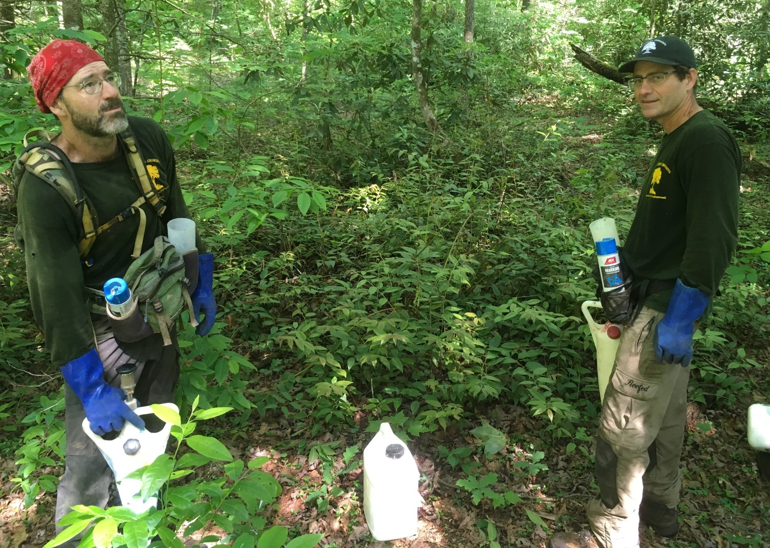 Will Blozan and Jason Childs, owners of Appalachian Arborists, prepare to treat Eastern Hemlock trees along the Coon Branch Trail.