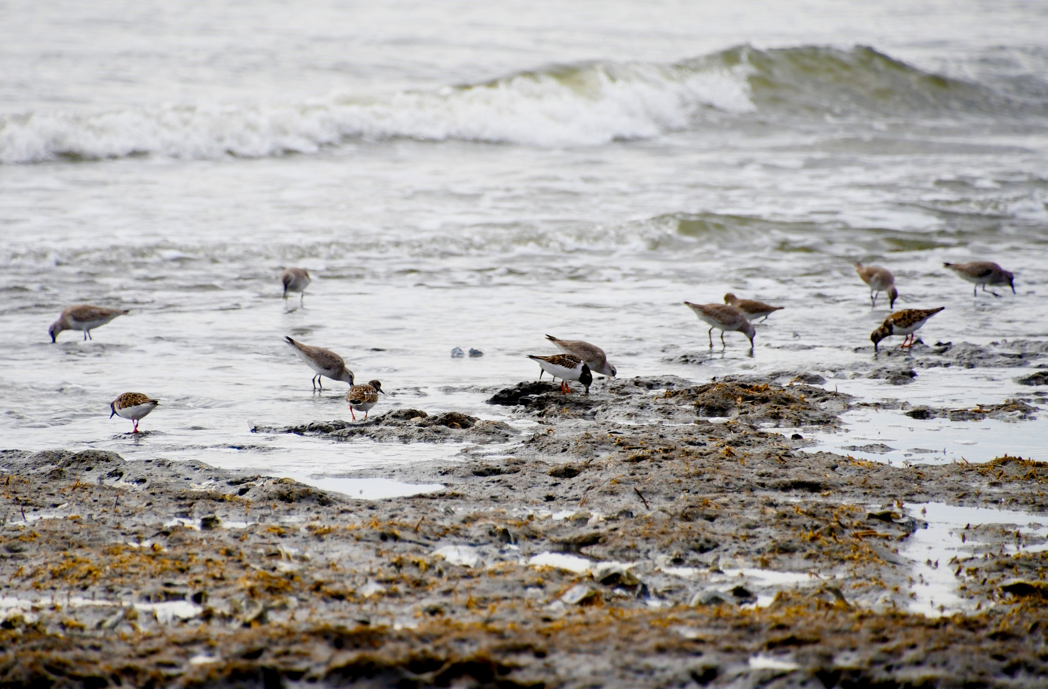 Shorebirds can be seen along the breaks in waves foraging for food at the SCDNR-managed Botany Bay Heritage Preserve. (SCDNR photo by Kaley Lawrimore)