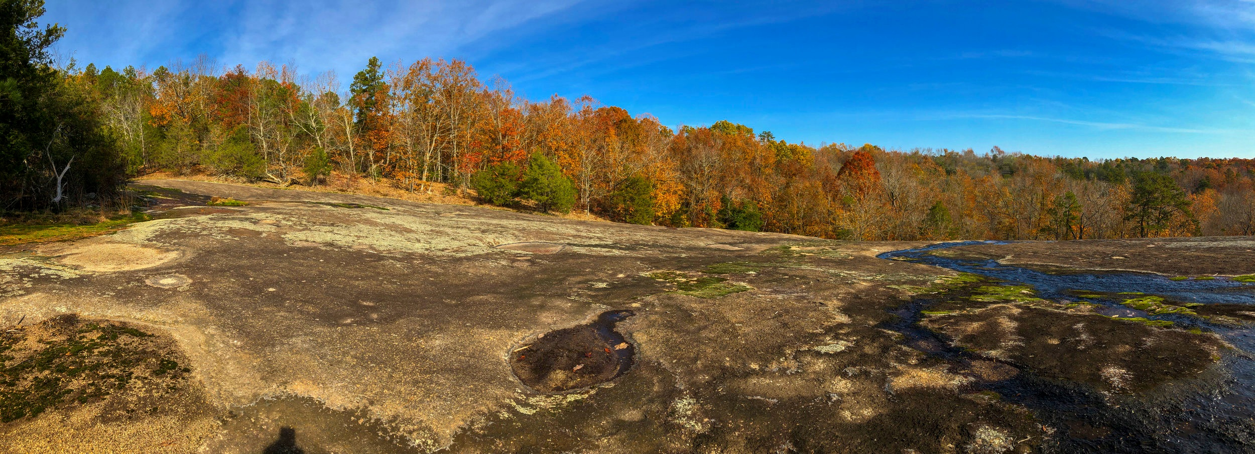 The lichen-covered rock and water-filled depressions make for a unique setting atop the SCDNR's Forty Acre Rock .