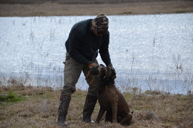 Love Farm Dog Photos_DLucas_135.JPG