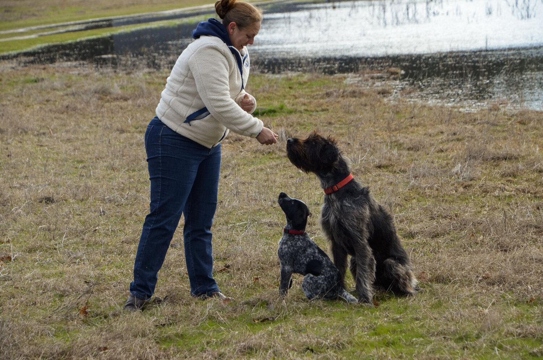 Love Farm Dog Photos_DLucas_024_1.JPG