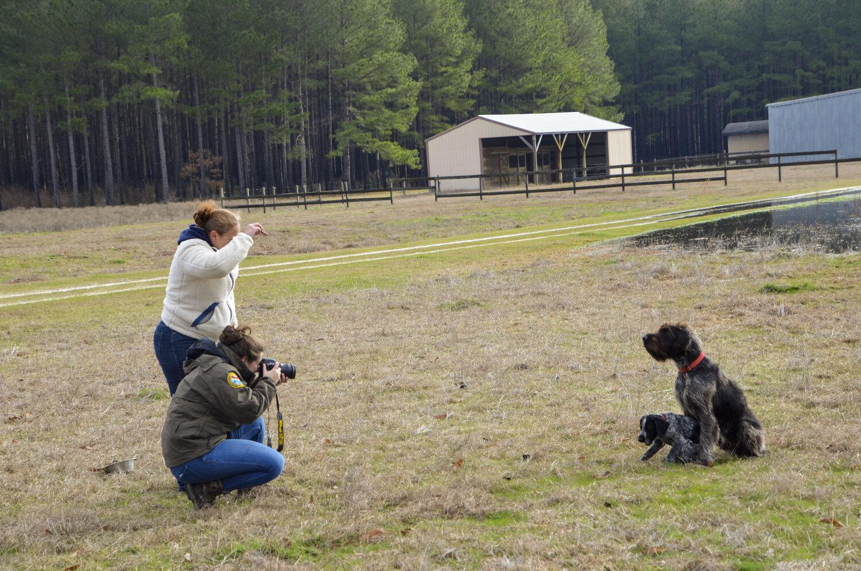 Love Farm Dog Photos_DLucas_027_1.JPG