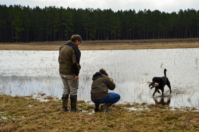 Love Farm Dog Photos_DLucas_249_1.JPG