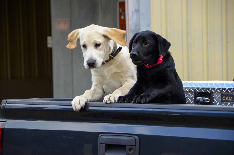 Love Farm Dog Photos_DLucas_276_1.JPG