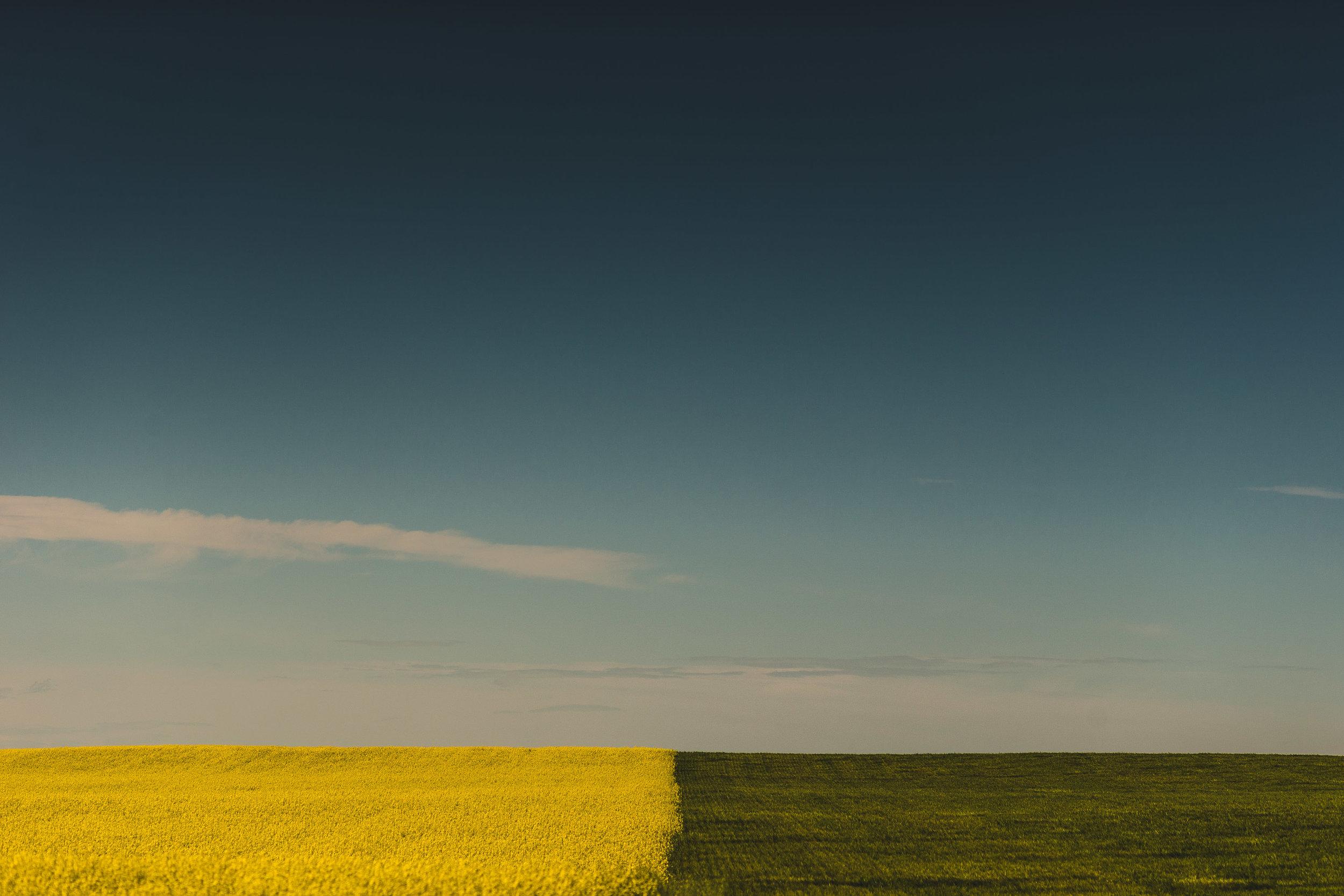 Website - Landscape - Februay 2017-1.jpg