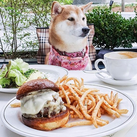 Sunday brunch is a must on a weekend as lovely as this one!! ☕️🍔 Check out @bread_and_butterfly and their puppy friendly patio!! 🐾❤️#brunch #sundaybrunch #sundayfunday 📸: @yukilovesfood
