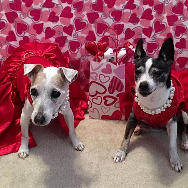 We LOVE all of our PuppyPals and wish you the happiest day of LOVE! 💞 You all spread kindness and love everyday, but especially today on Valentines Day! Check of these sweet and festive pups and then tag us in your best Valentines attire to be featured in our story today! 🐾❤️ #valentinesday #valentine #bemine #love 📸: @lucyandholly_atlgirlzclub @the_glennjamin_button @wileysatladventures @simbybimby @theadventuresof3pups @gusthegoldenboy