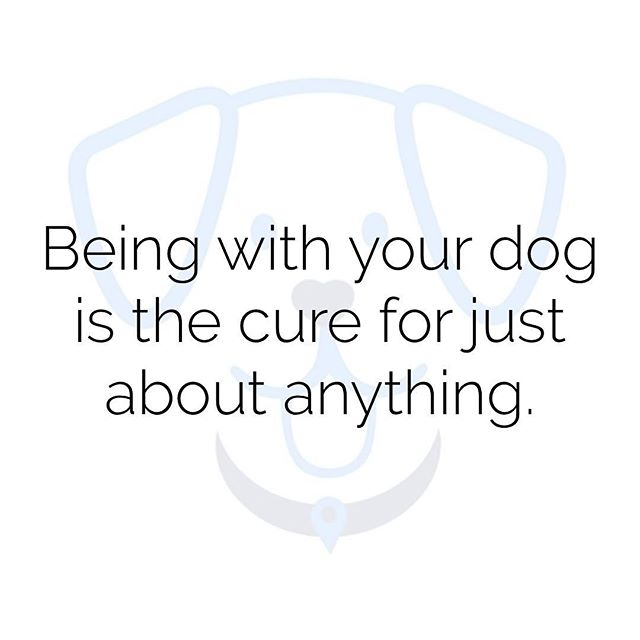From the sniffles to a broken heart... puppy love cures it all! 🐾❤️ #puppylove #mondaymotivation