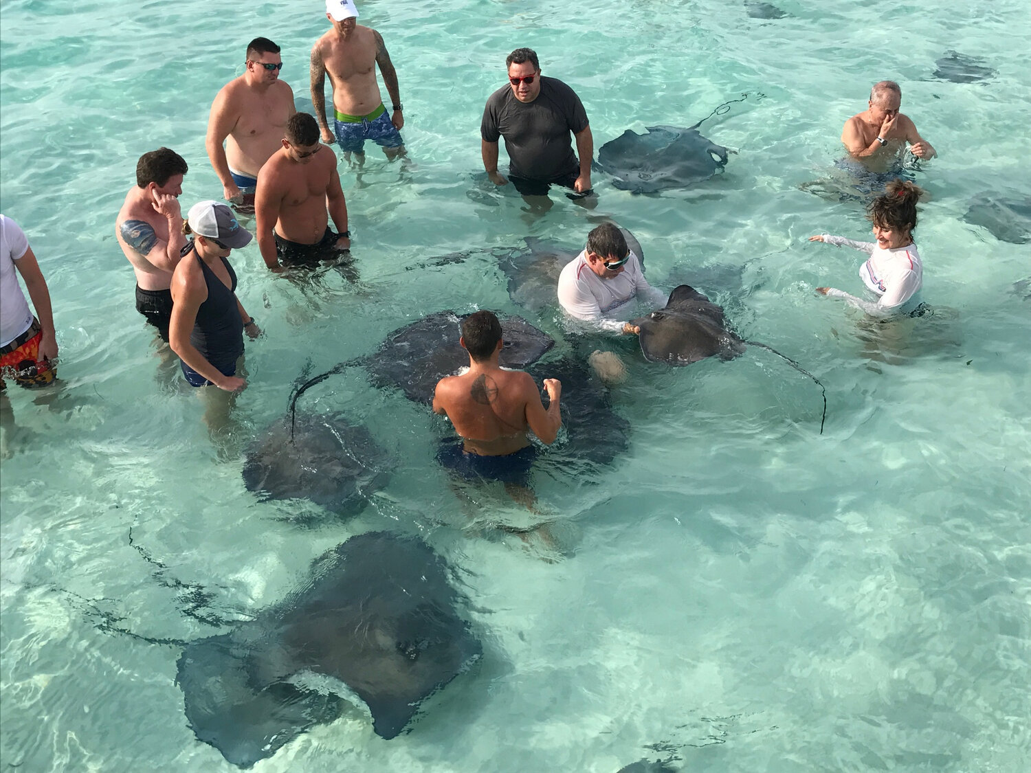 """Business Executives bonding in """"Stingray City"""" off the coast of Grand Cayman"""