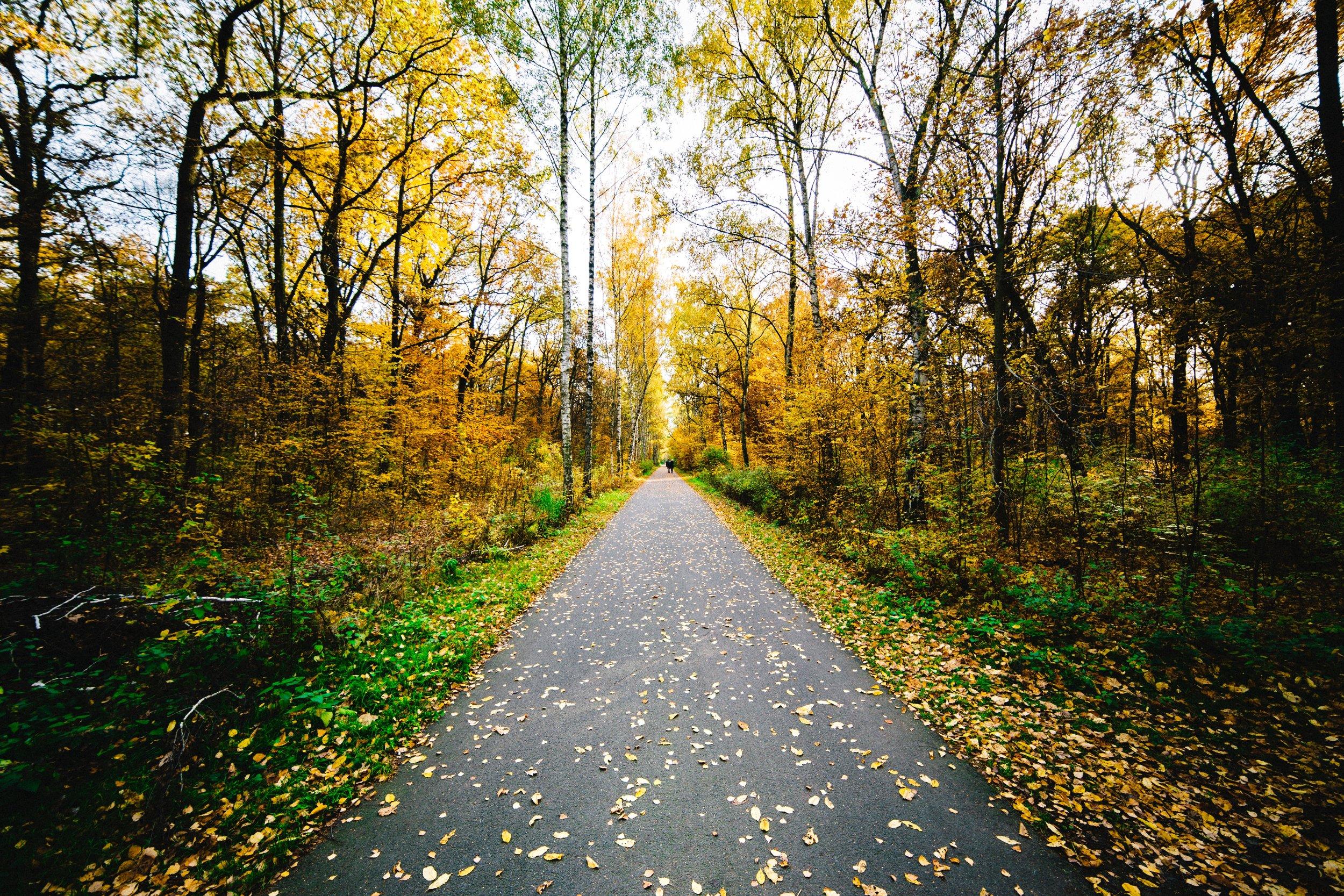 Preferred path -