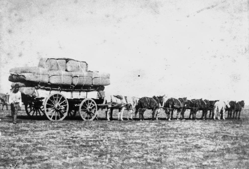 StateLibQld_2_101744_Team_of_horses_pulling_a_large_wagon_loaded_with_wool_bales_from_Jimbour_Station_on_the_Darling_Downs,_Queensland.jpg