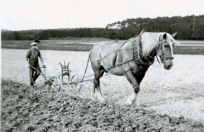 plow horse.jpg