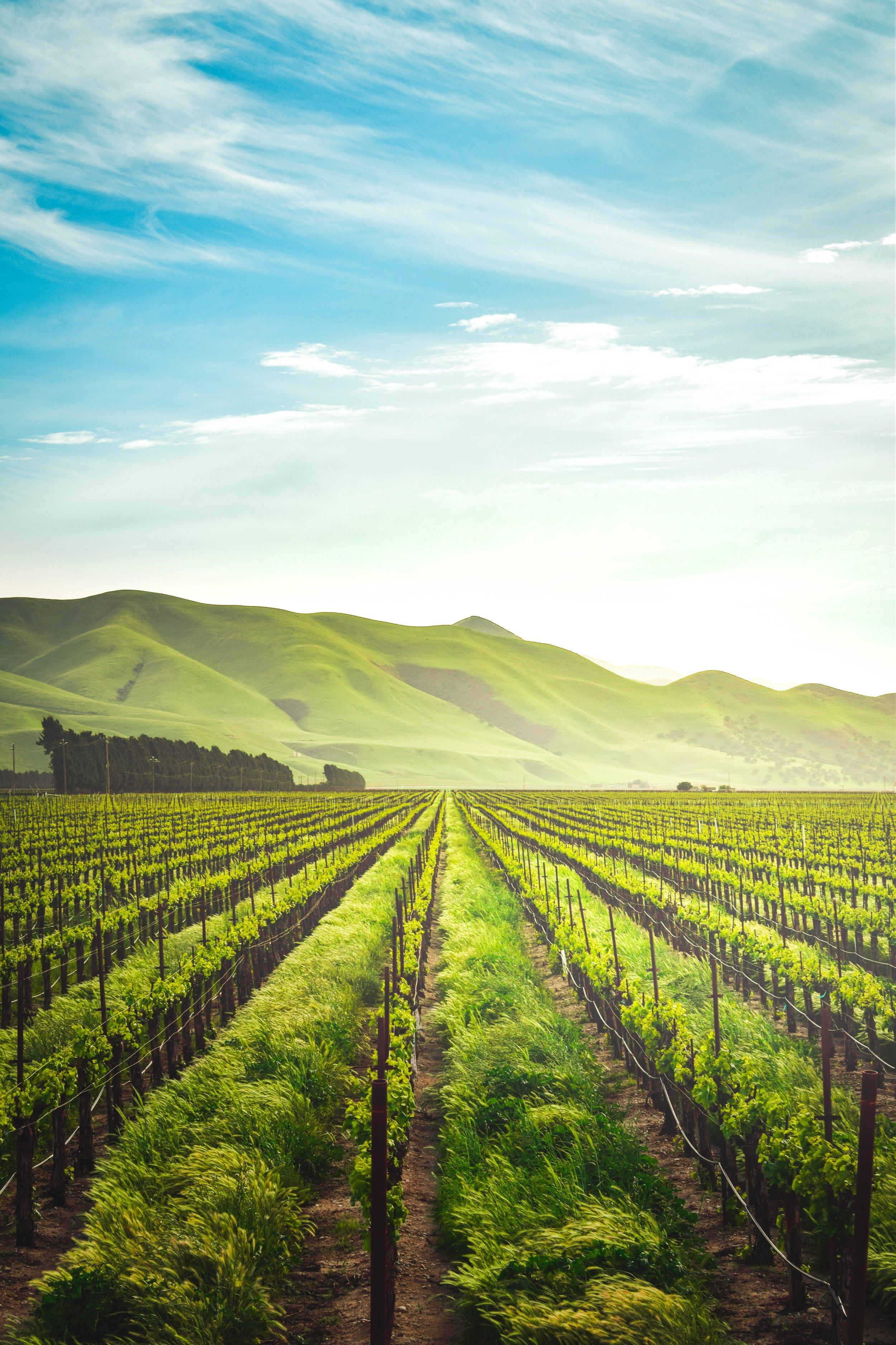 organic-winery.jpg