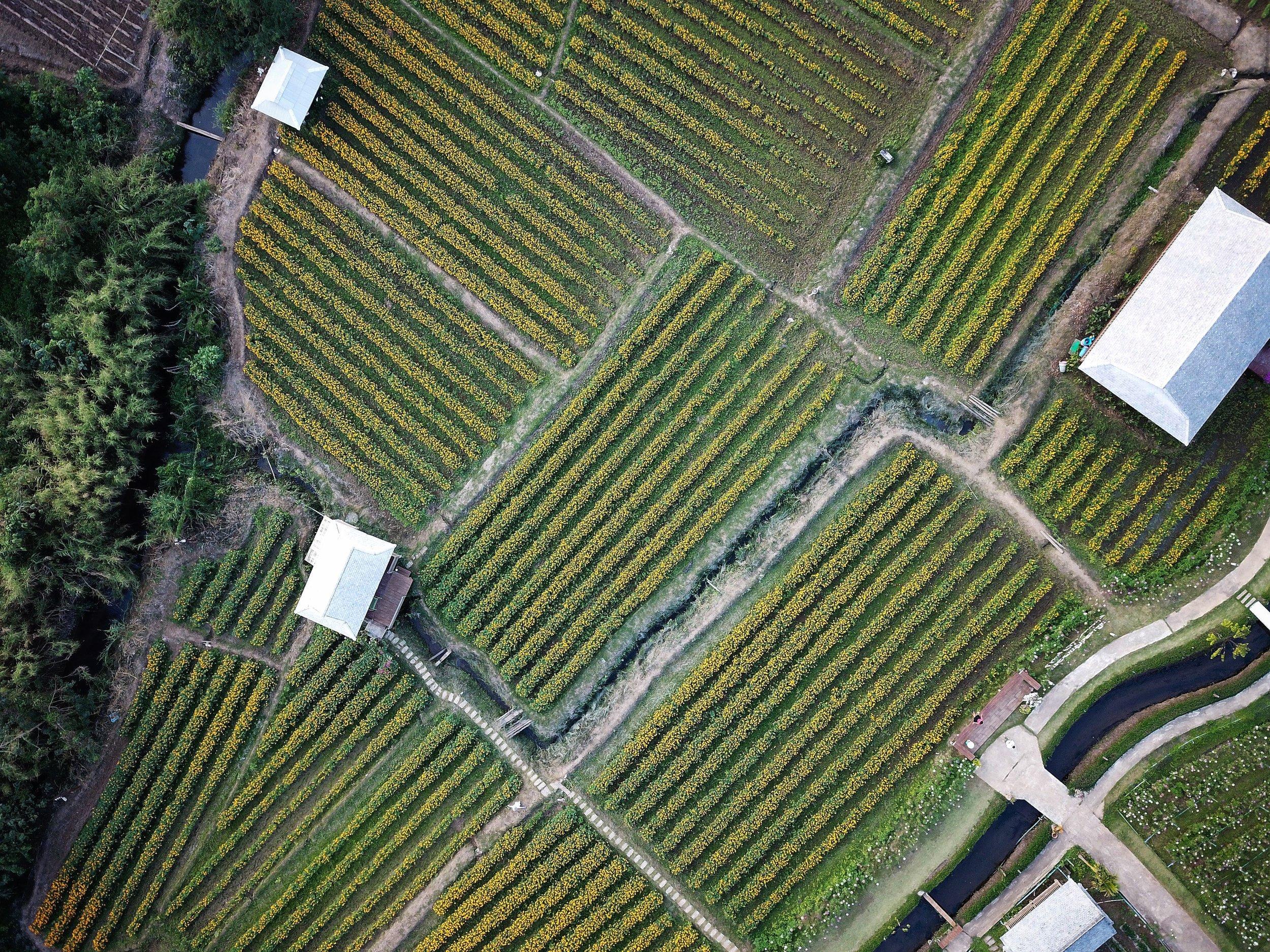 organic-farm-investment.jpg