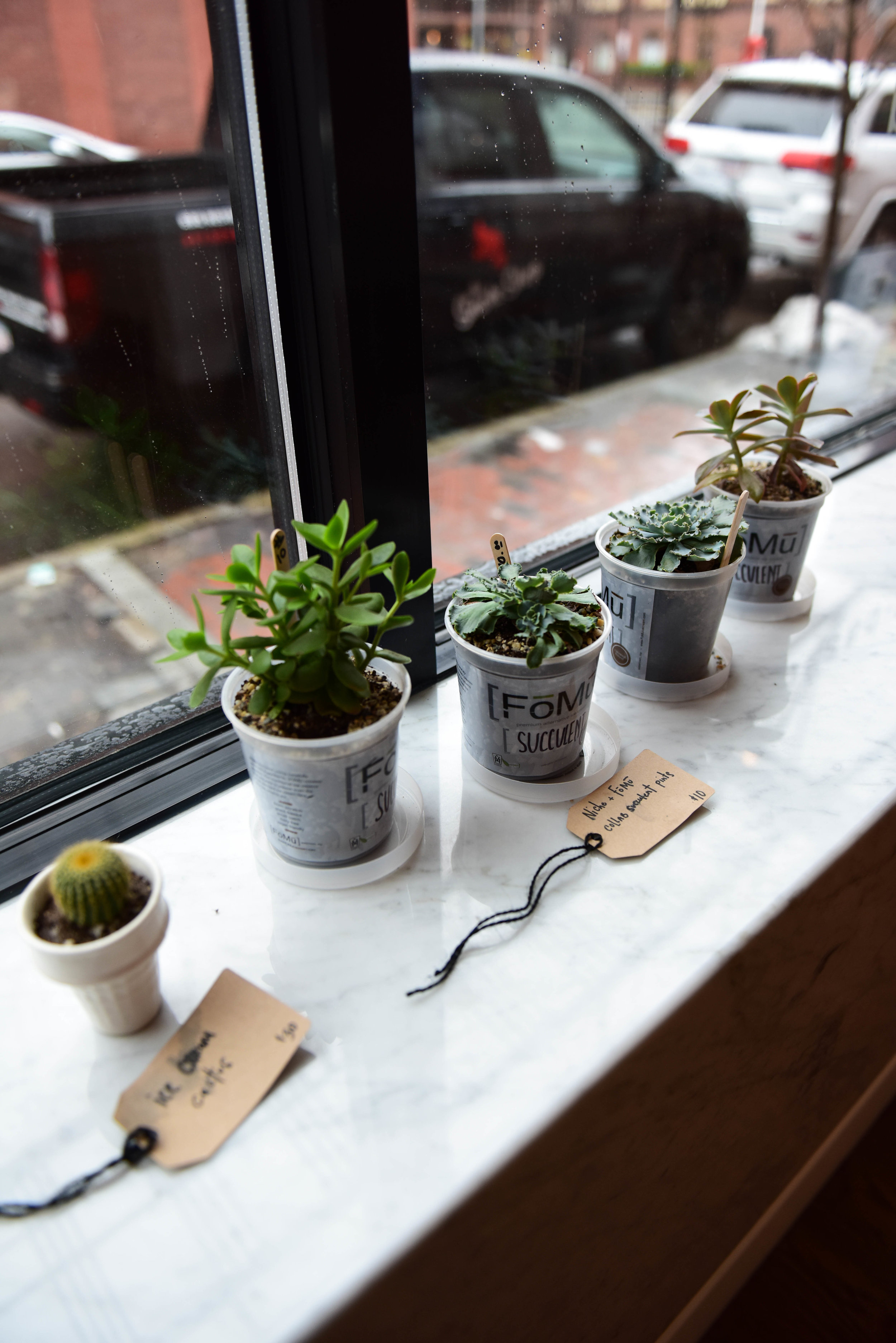 Speaking of local businesses, FoMu shared a pop-up space on Newbury Street last year with with a fellow women-owned business, Niche. The two companies both own shops on Tremont Street in the South End, and you can grab a little collaboration greenery from FoMu while you're picking up a pint.