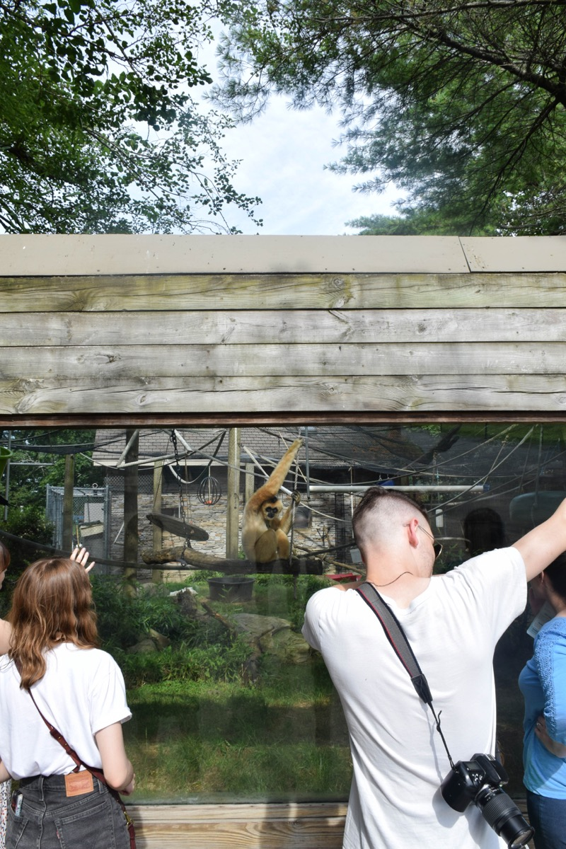 Jake dabbed in front of a gibbon, making the poor ape question why it was the one in the cage.