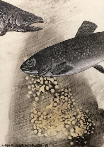 Fish Fuss