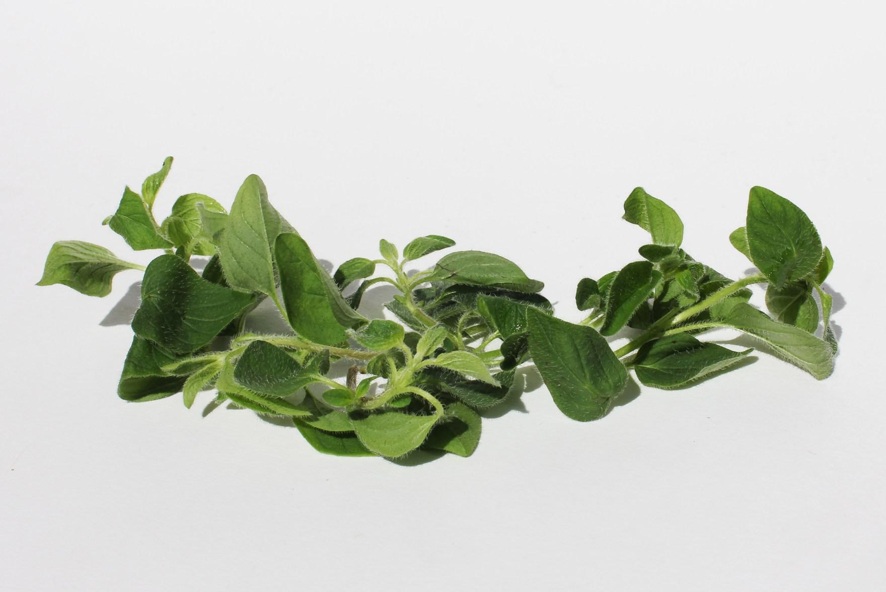 Herbs for Healing (Russh.com)