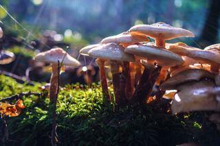 Mushrooms 2.jpg