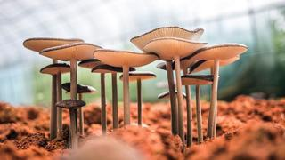 Mushroom 3.jpg