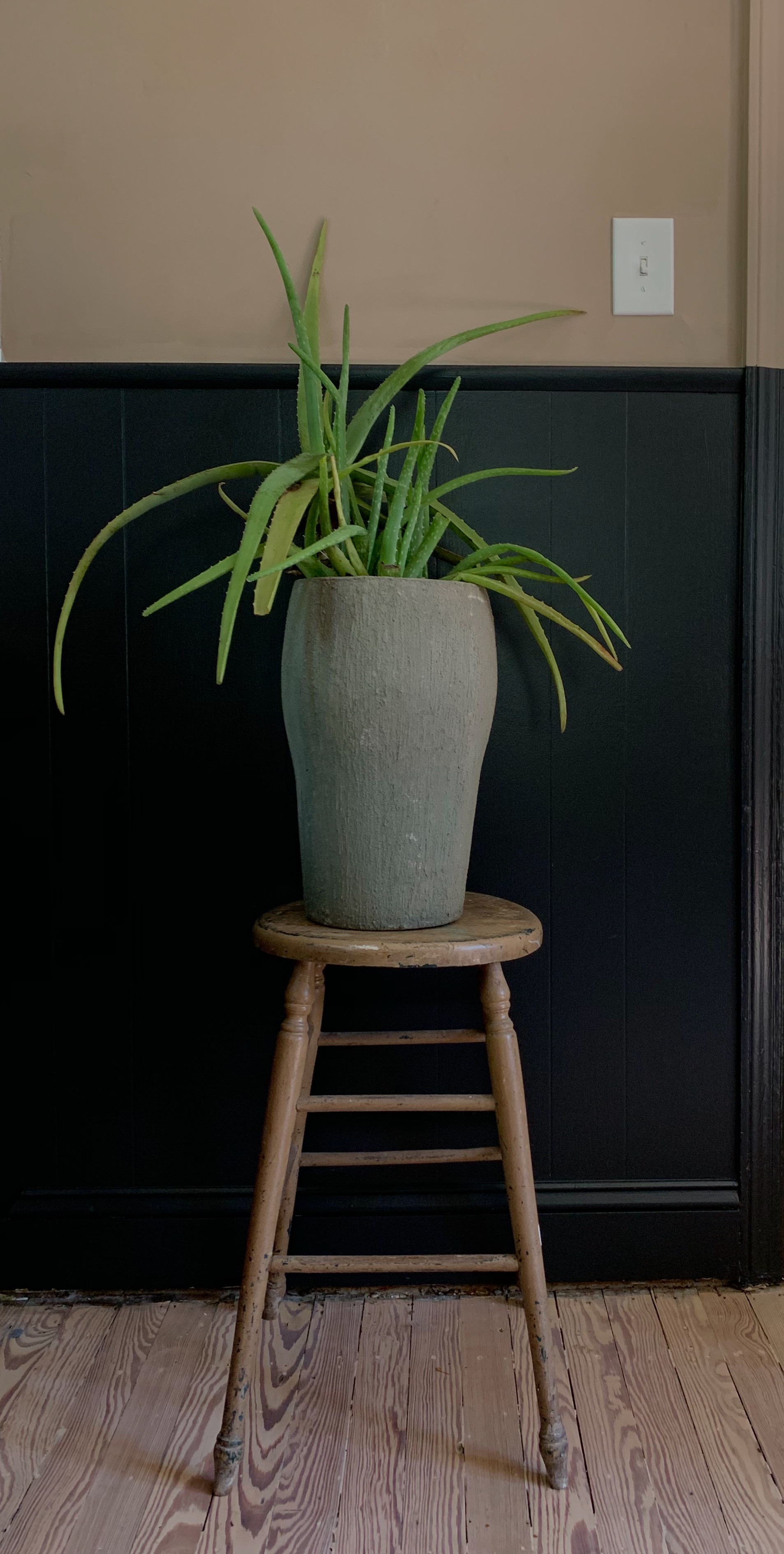Aloe is a great addition to any room. The striking form and color provides contrast against a dark wall.