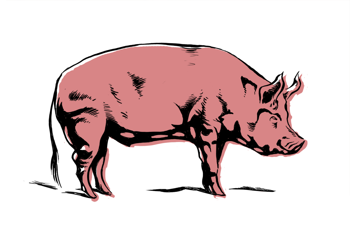 PIg .png