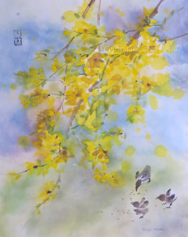 C.Coville Forsythia  and Chicks,  ink and watercolor, 9.75 x 12.5 in.jpg