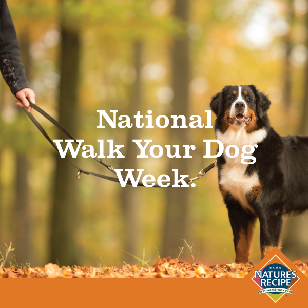 1-Walk-Your-Dog-Week-final.png