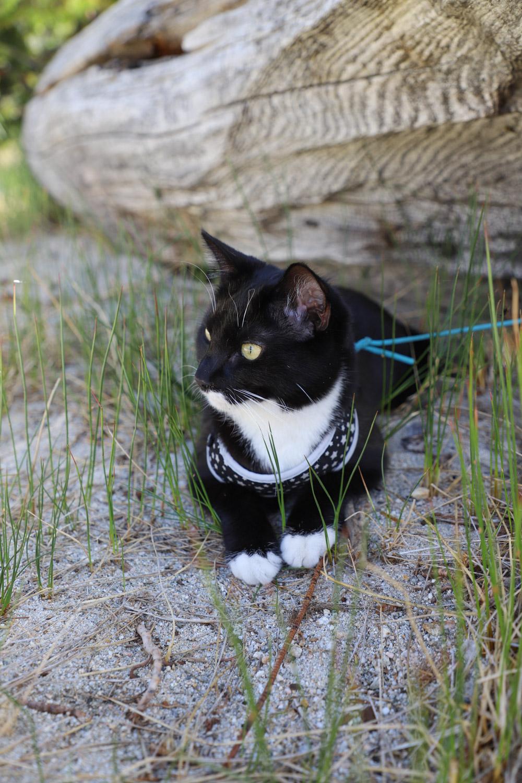 Adventure Cat Travel-12.jpg