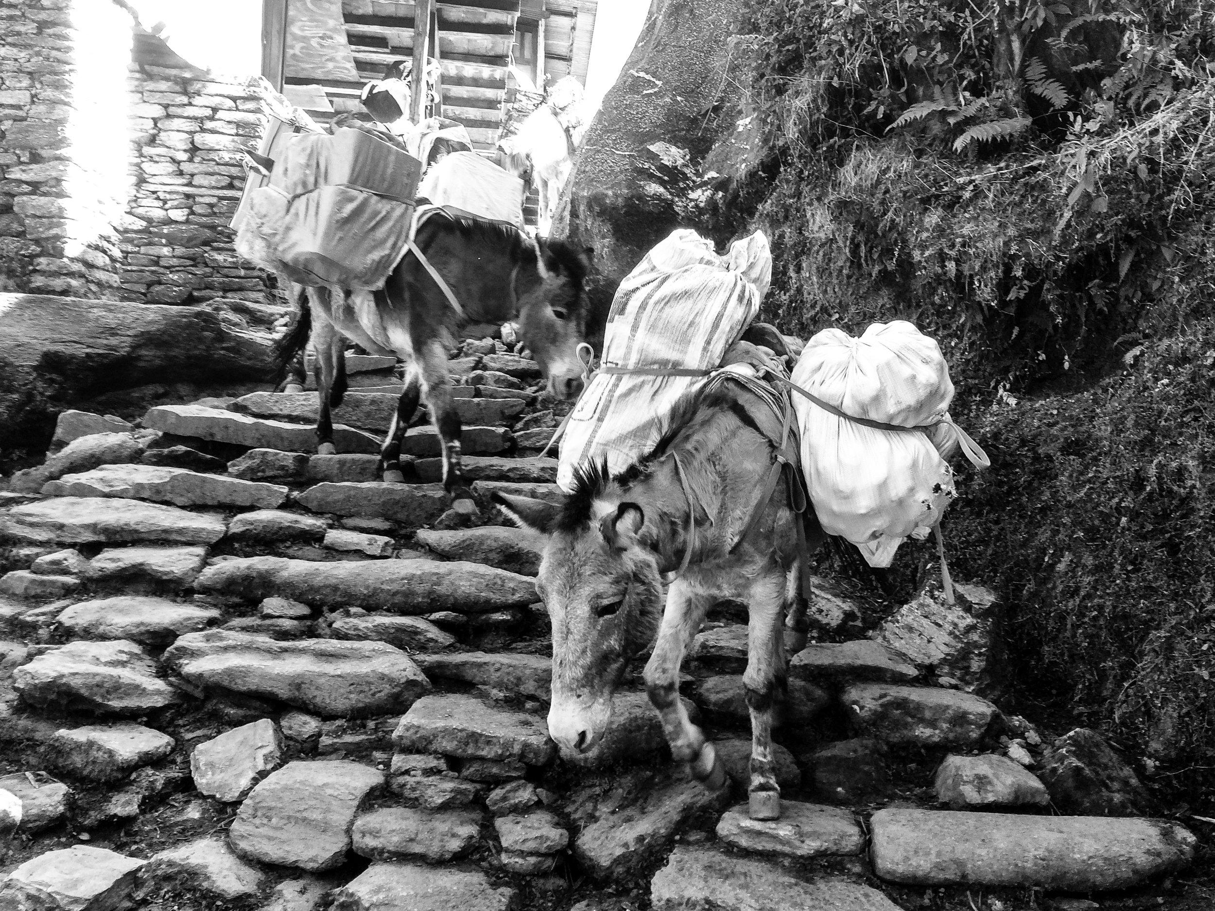 Mountain Mules_Nepal_Mono_-1.jpg