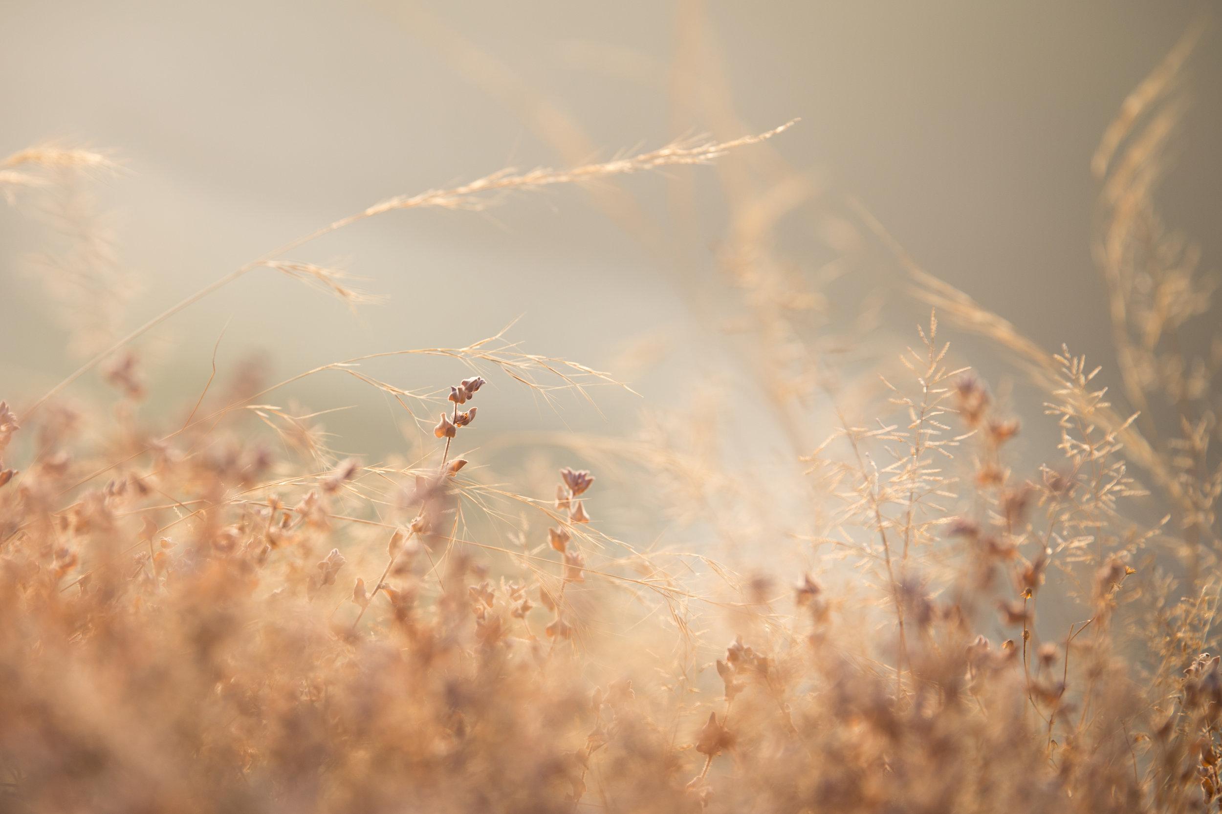 Heart of Grass_Hampi_-1.jpg