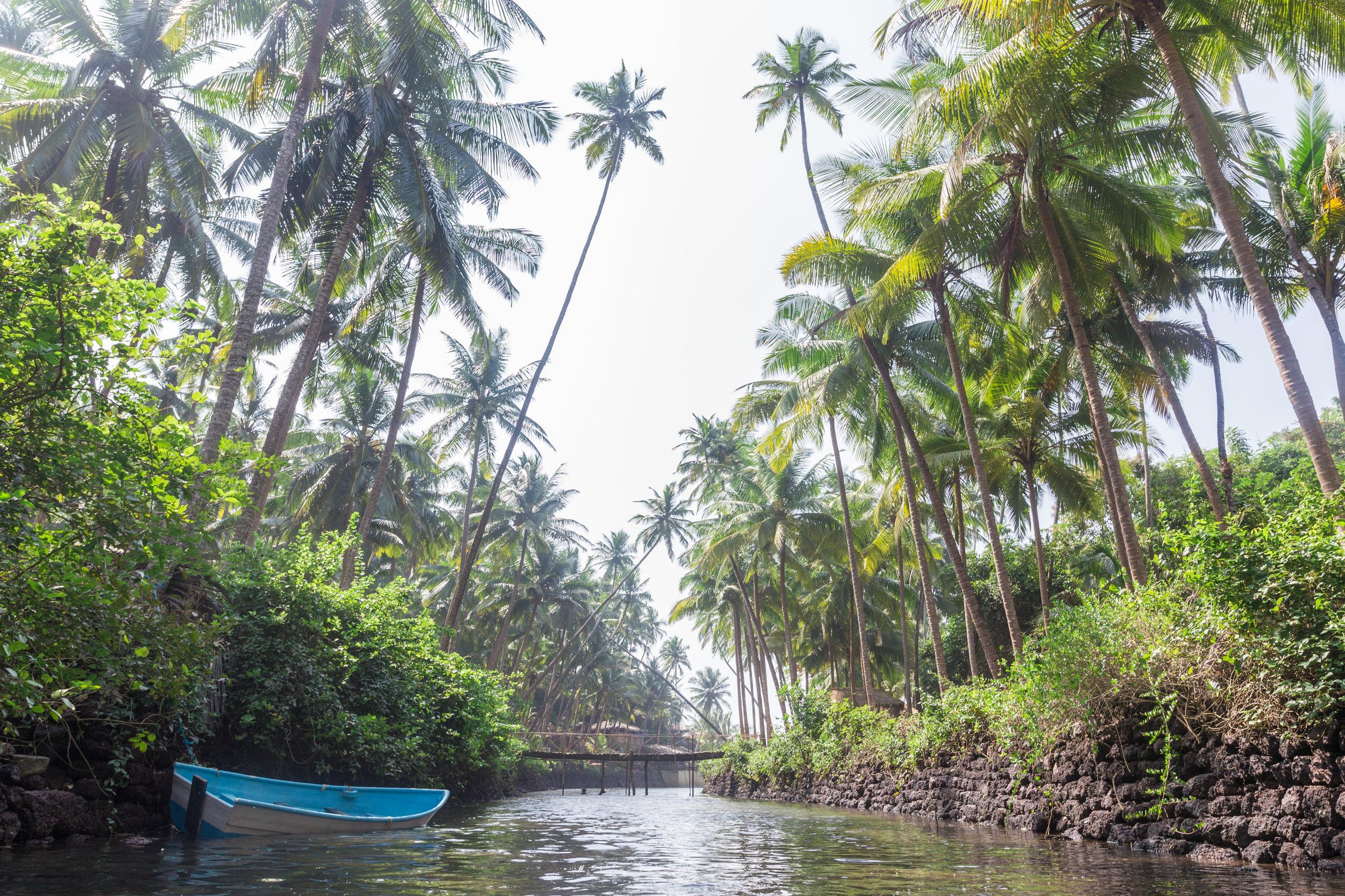 Palm Trees_Cola Beach_-1.jpg
