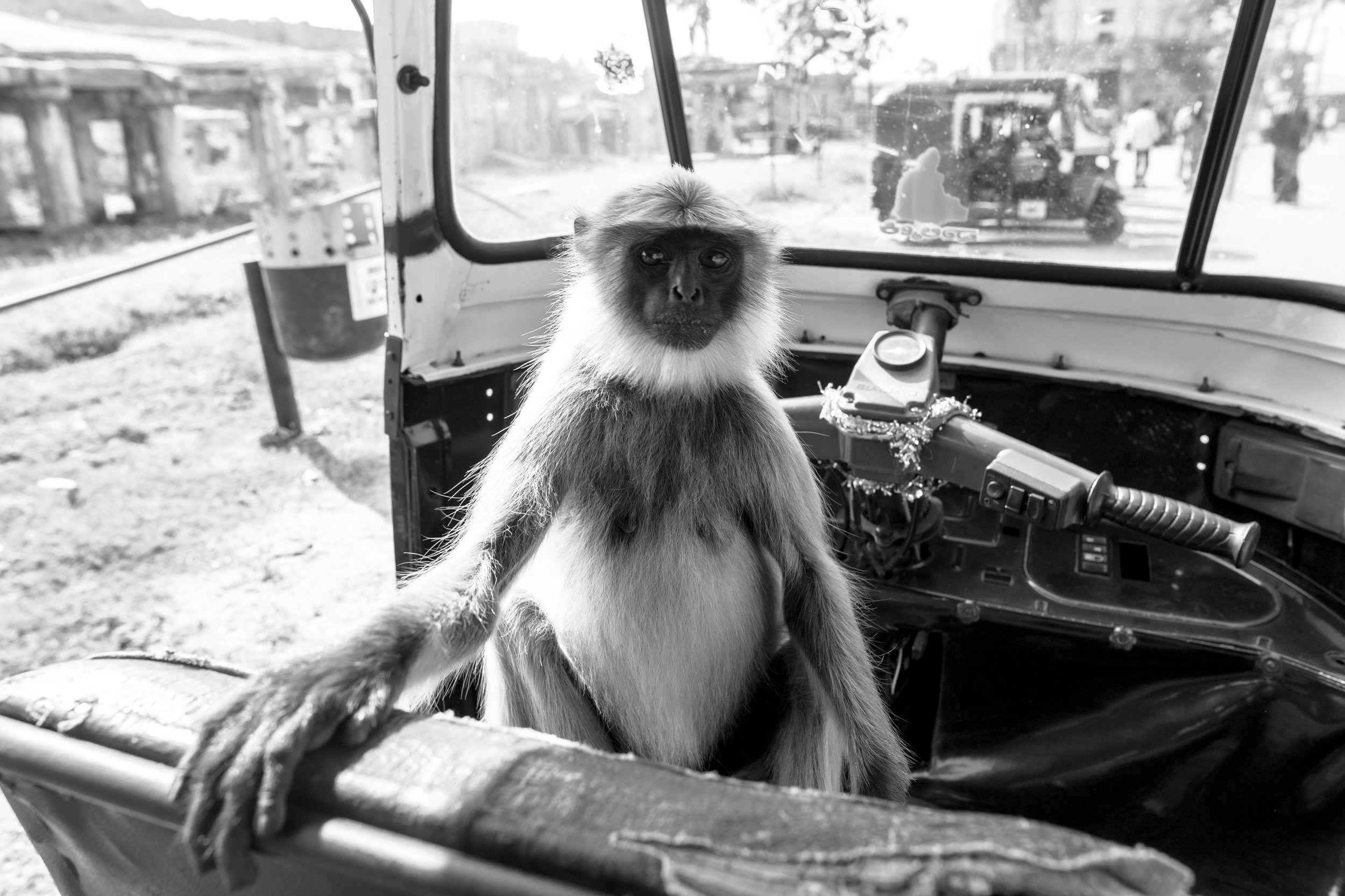 Monkey In Rickshaw_Hampi_Mono_-1.jpg