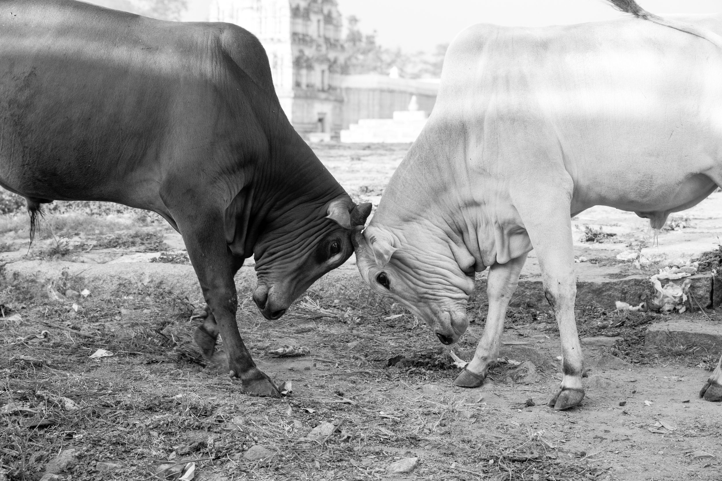 Head Butt_Hampi_Mono_-2.jpg