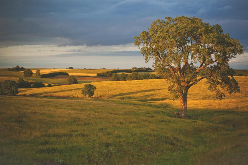 landscapes (4 of 15).JPG
