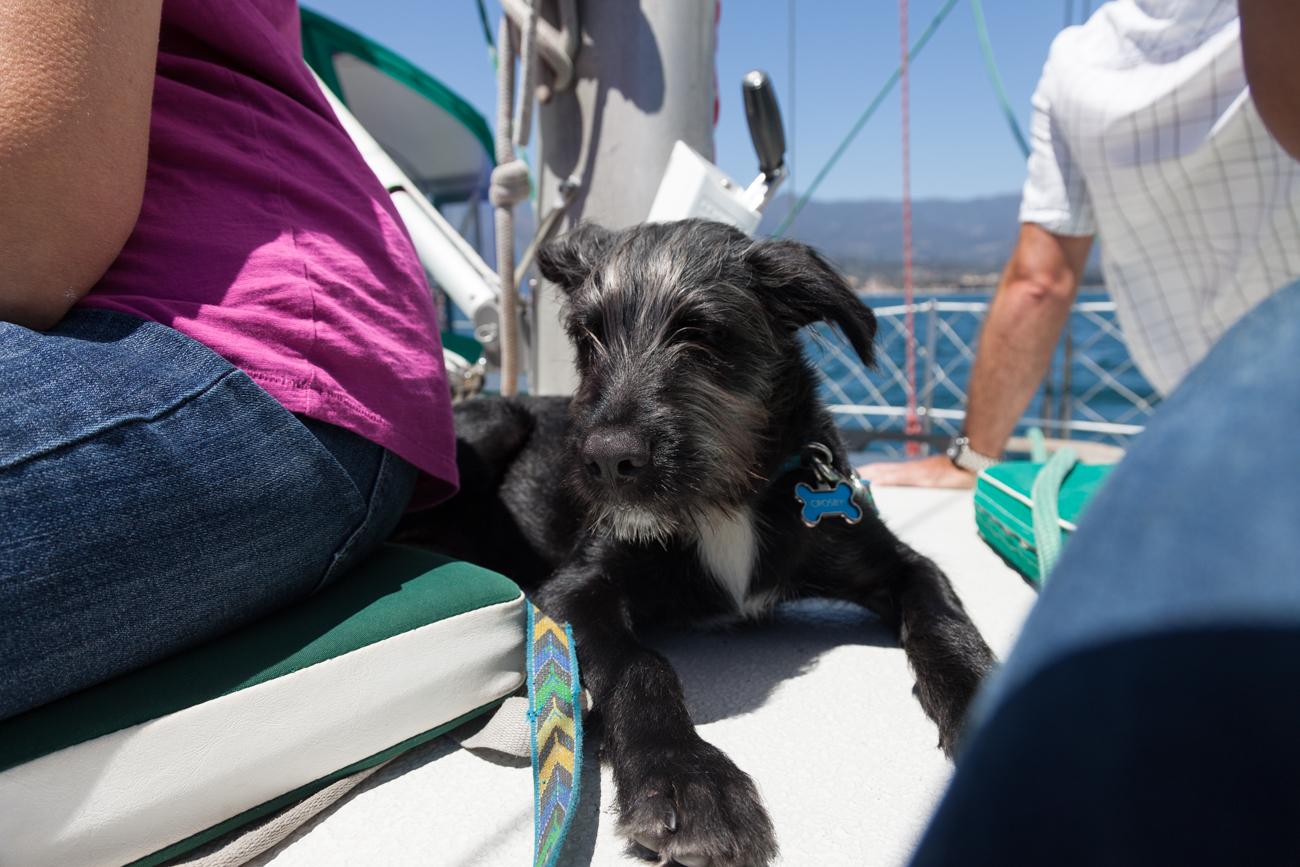 Crosby sailing