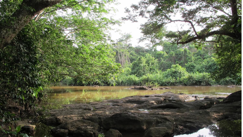 oshun river, dunja herzog, sacred grove of osun osogbo, susanne wenger