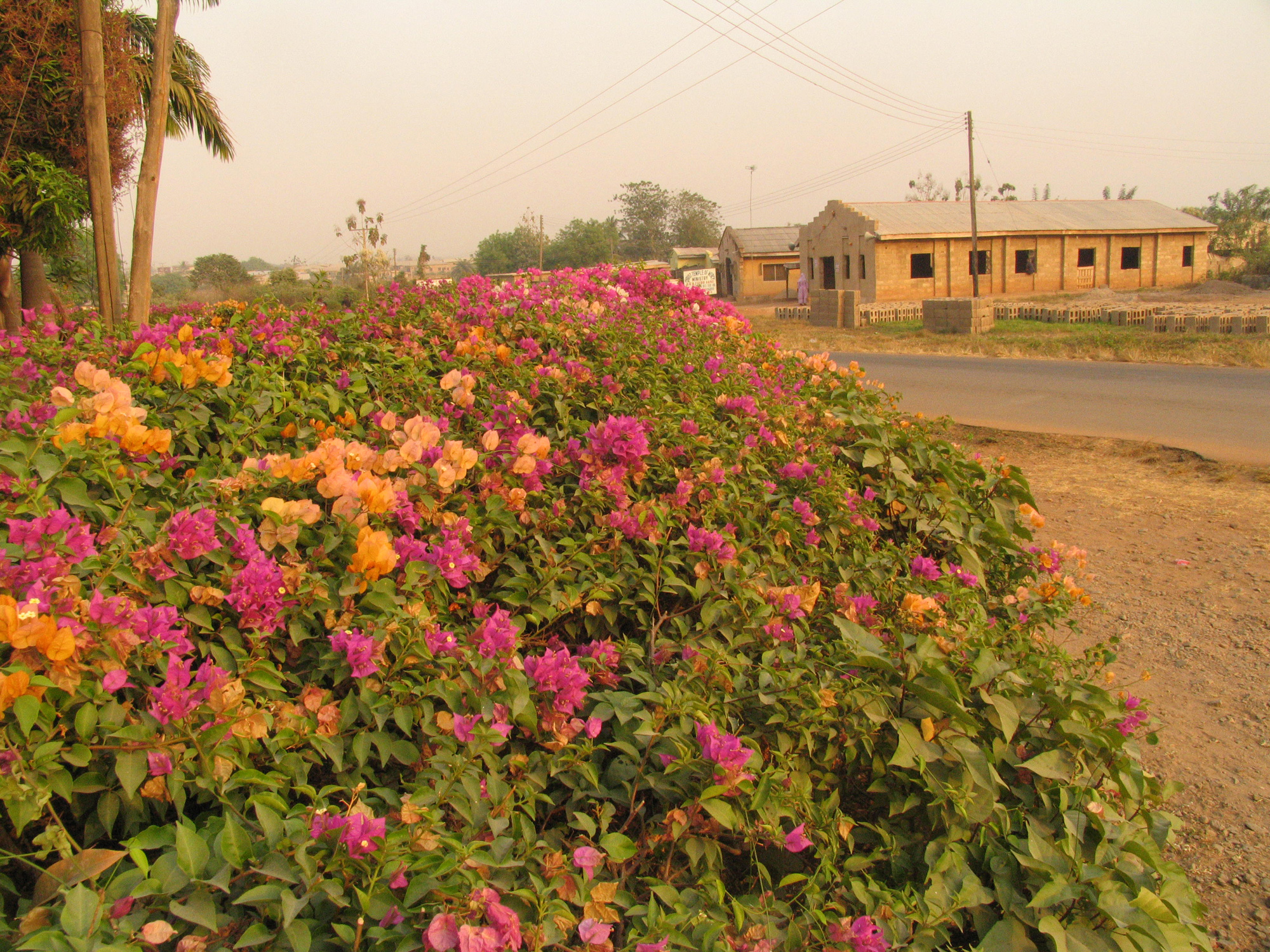 The beautiful red colored sunlight during dry season in Òṣogbo, Nigeria.©Wolfgang Denk