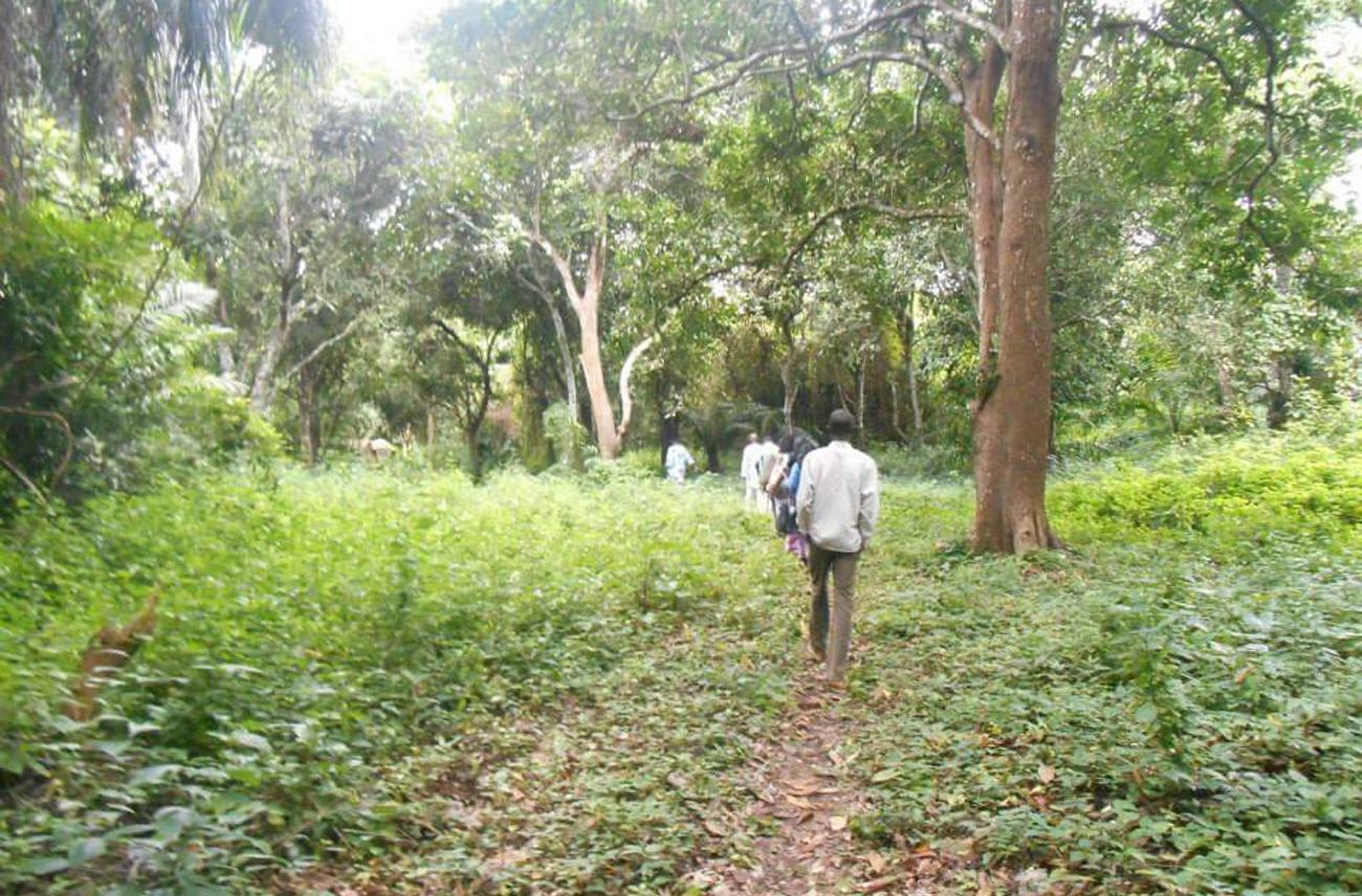 A walk into a sacred grove to the shrine of an Òrìṣà.©Ilé Àrìrà