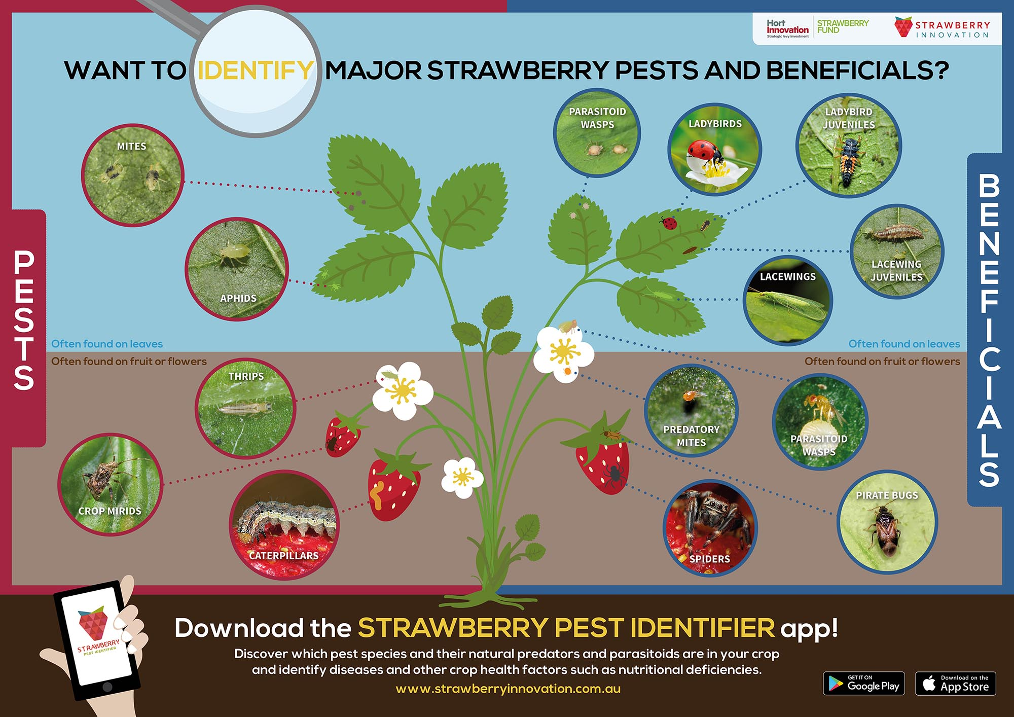 FINAL Strawberry Pests and Beneficials - WEB.jpg