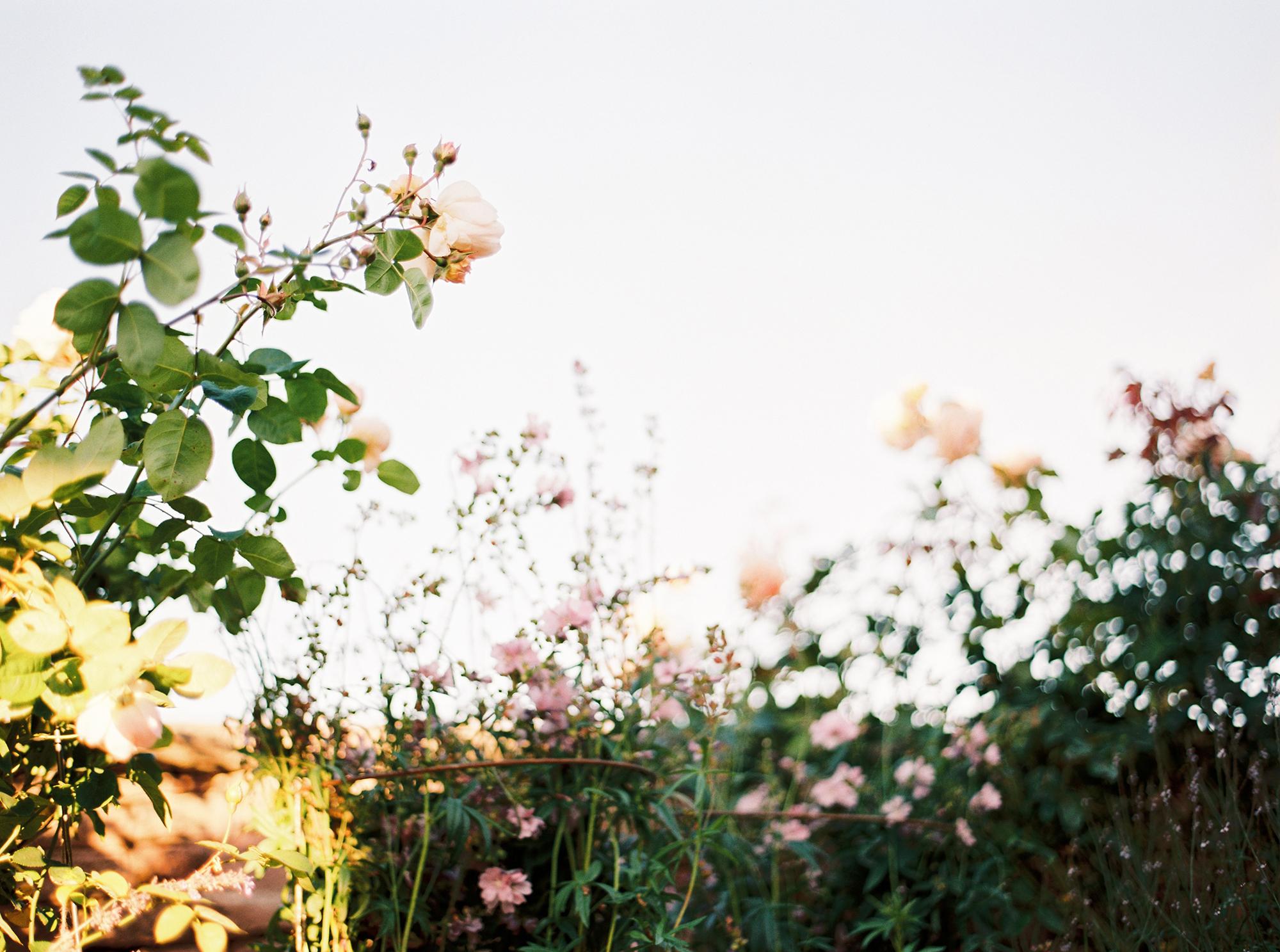 branding_photographer_cumbria (1).jpg