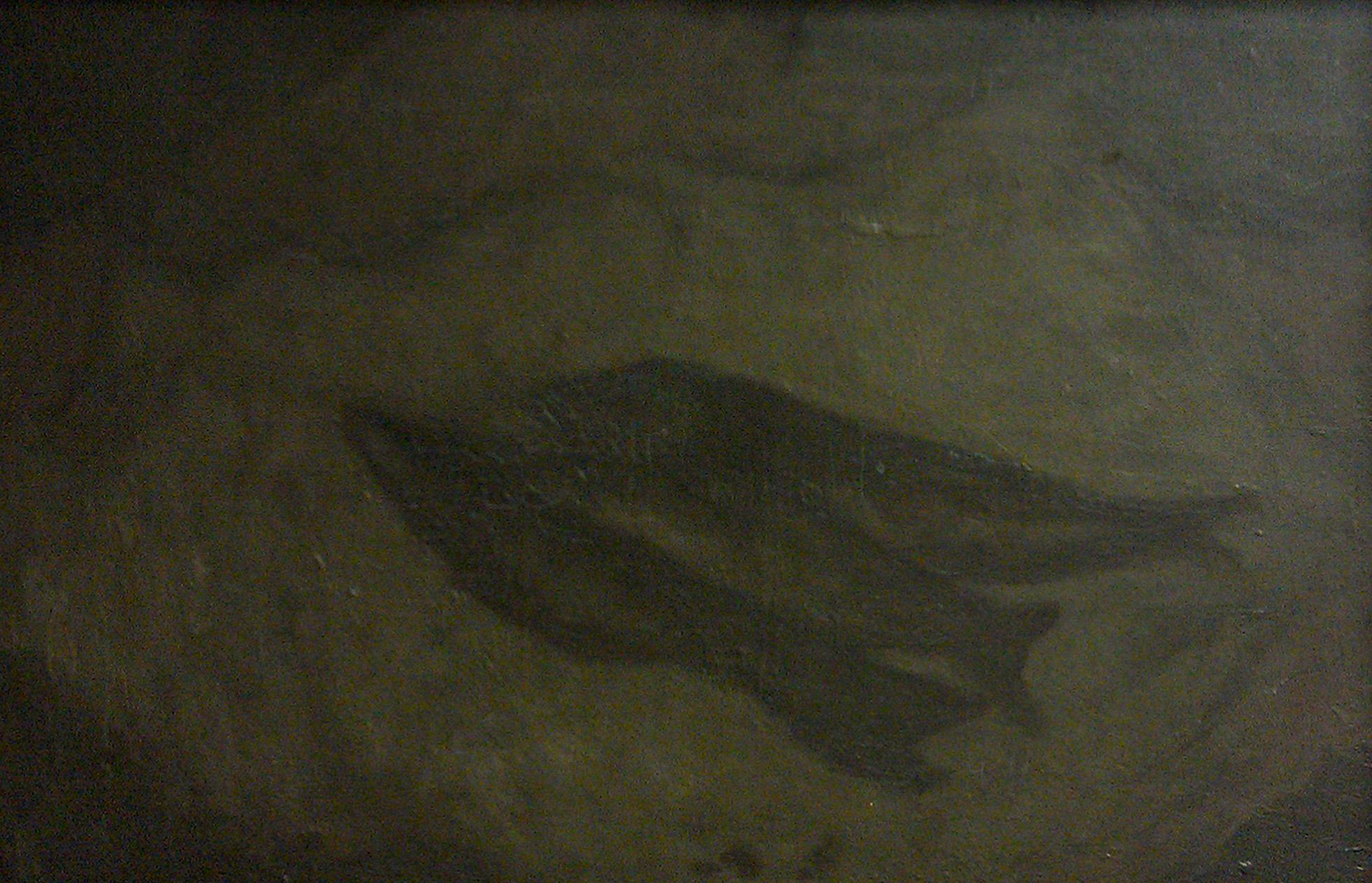 Bahringer Fish Before.jpg