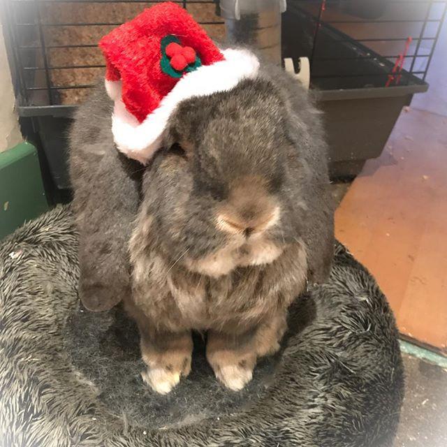 Merry Christmas you filthy animal! 🎄🎄
